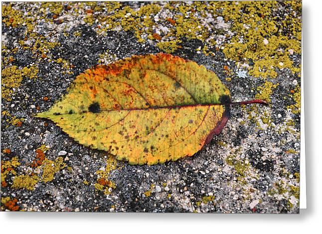 Leafage...lichens Greeting Card