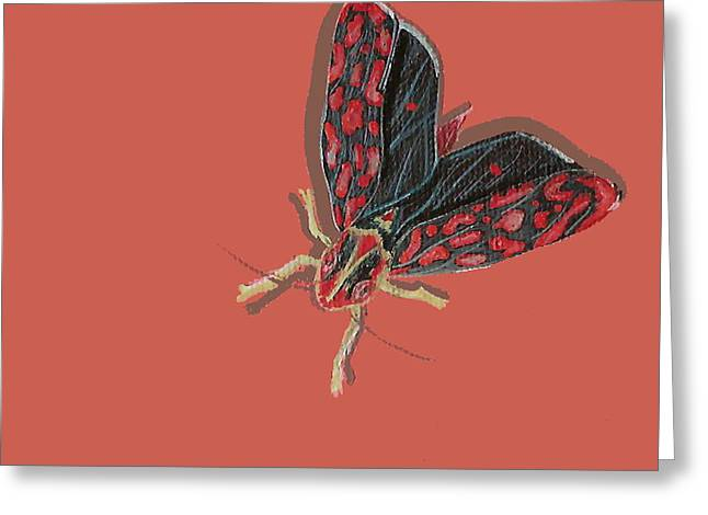 Leafhopper Greeting Card