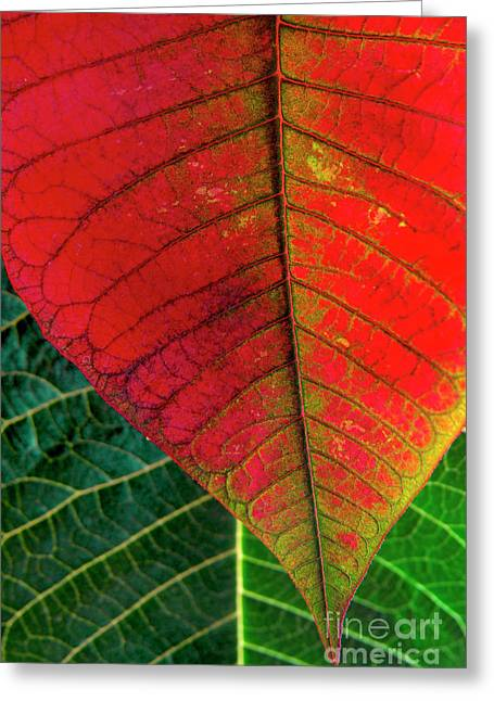 Leafs Macro Greeting Card by Carlos Caetano