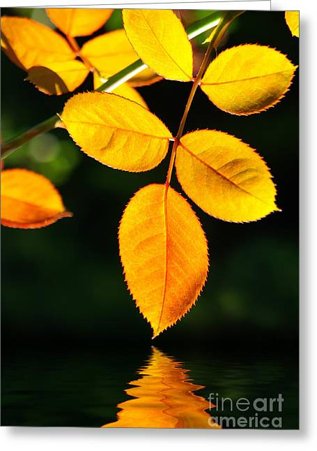 Green Leaves Greeting Cards - Leafs over water Greeting Card by Carlos Caetano