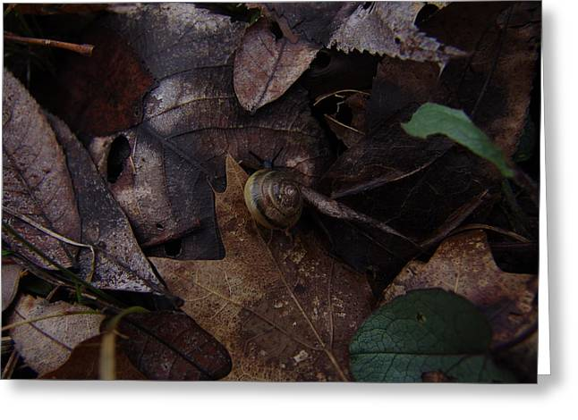 Leafs With Snail 03 Greeting Card by Ryan Vaal