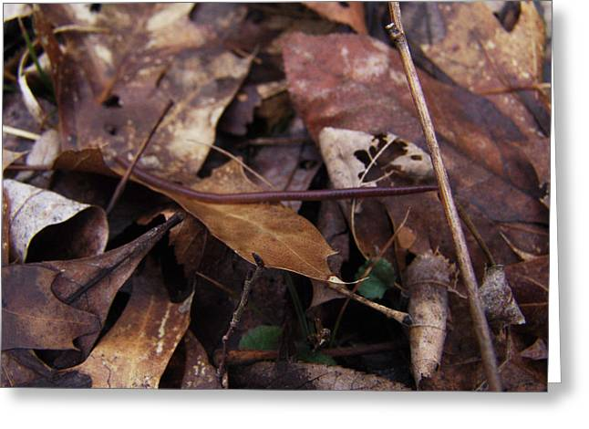 Leafs With Worm 013 Greeting Card by Ryan Vaal