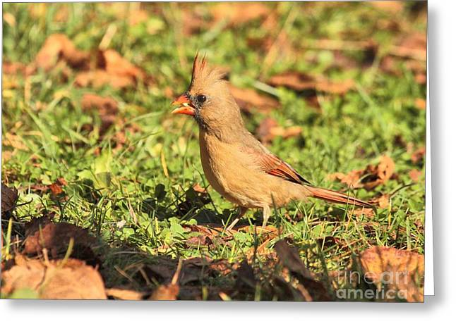 Leafy Cardinal Greeting Card by Debbie Stahre