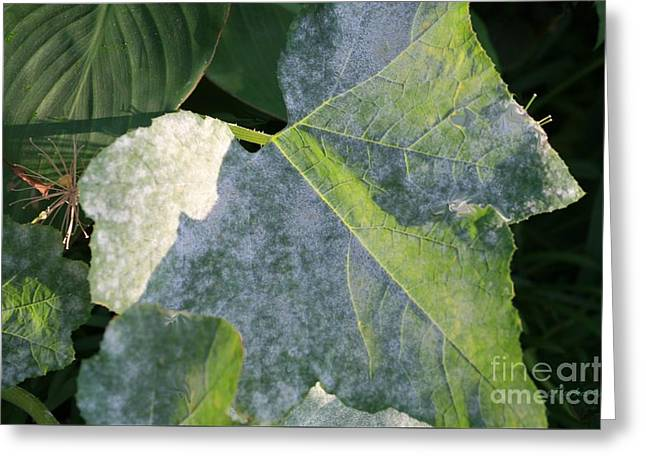 Calming Leafy Glade Greeting Card