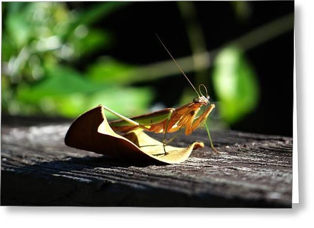 Leafy Praying Mantis Greeting Card