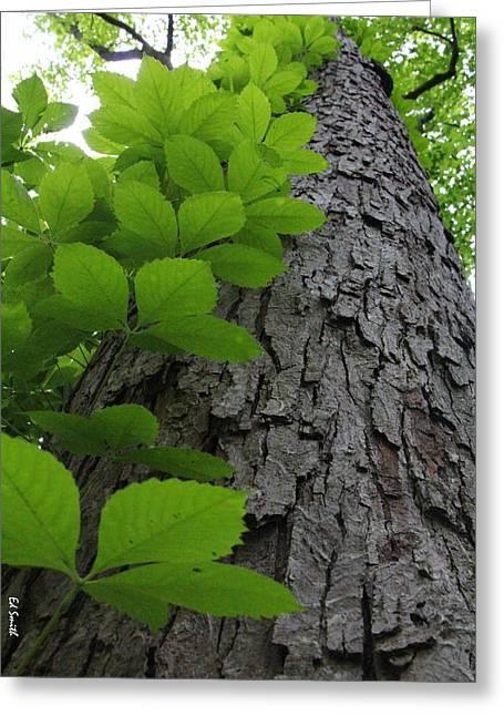 Leafy Ladder Greeting Card by Ed Smith