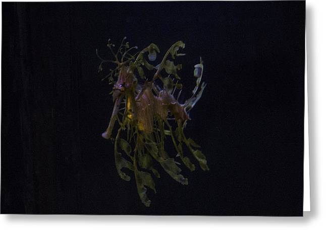 Leafy Sea Dragon Greeting Card by Ruth Jolly