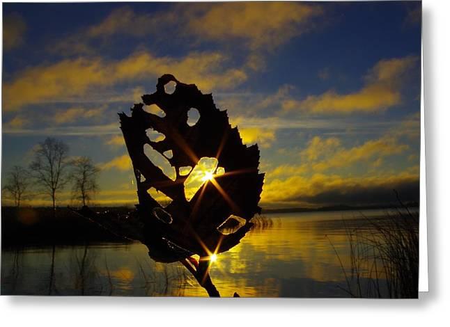 Leafy Sunburst Greeting Card by Tim Beebe