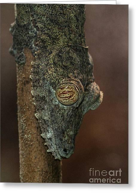 Leafy Tree Gecko  Greeting Card