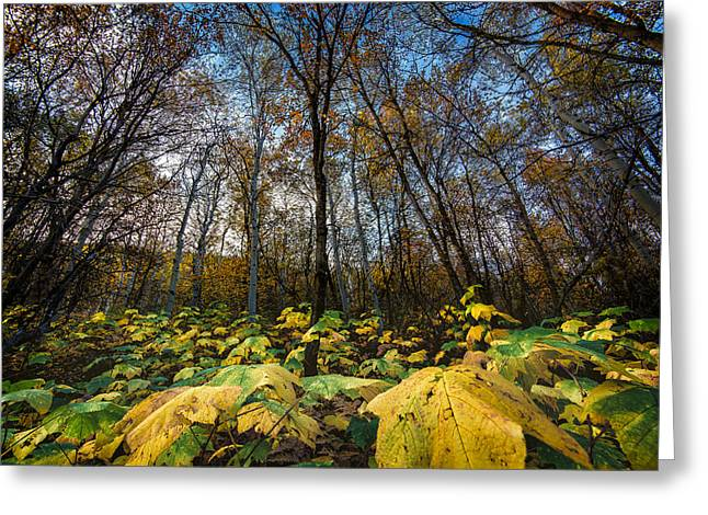 Leafy Yellow Forest Carpet Greeting Card