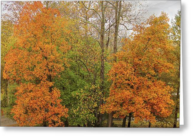 Greeting Card featuring the photograph Leaning Into Autumn by Bellesouth Studio
