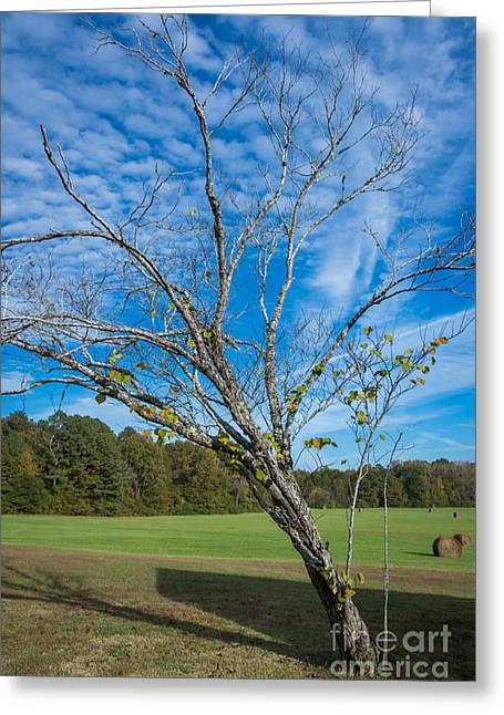 Leaning Tree Enhanced - Natchez Trace Greeting Card by Debra Martz