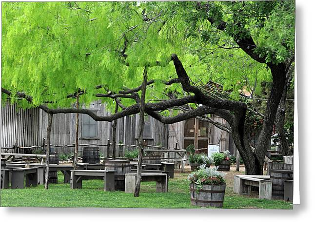 Leaning Tree Greeting Card by Teresa Blanton