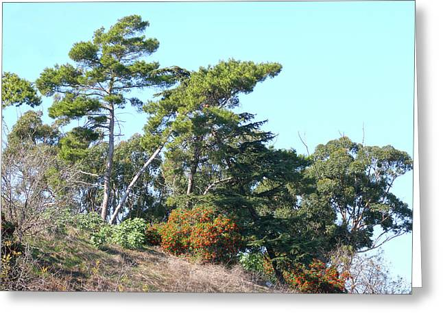 Leaning Trees On Hillside Greeting Card