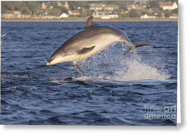 Jolly Jumper - Bottlenose Dolphin #40 Greeting Card
