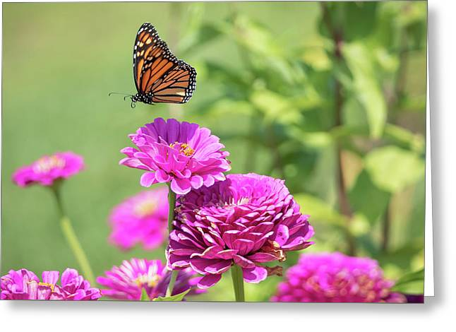 Leaping Butterfly Greeting Card