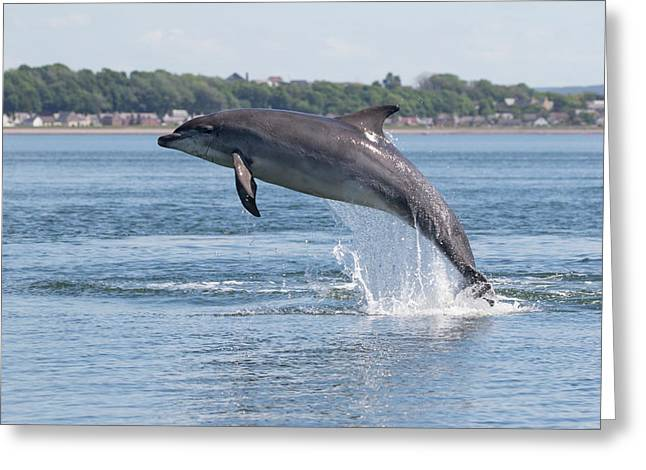Greeting Card featuring the photograph Leaping Dolphin - Moray Firth, Scotland by Karen Van Der Zijden