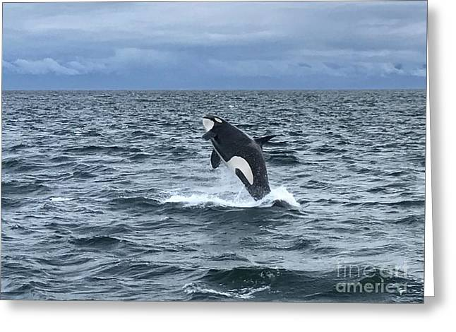 Leaping Orca Greeting Card
