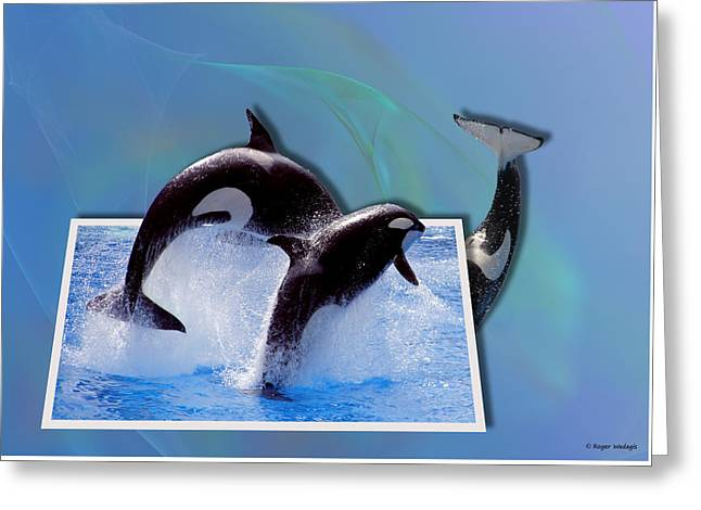 Leaping Orcas Greeting Card by Roger Wedegis