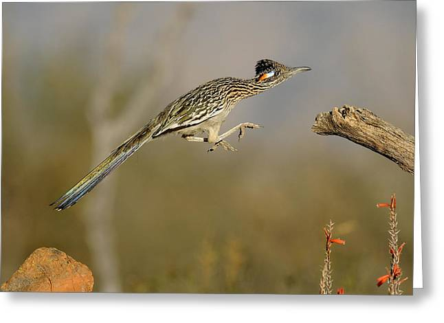 Leaping Roadrunner Greeting Card by Scott  Linstead