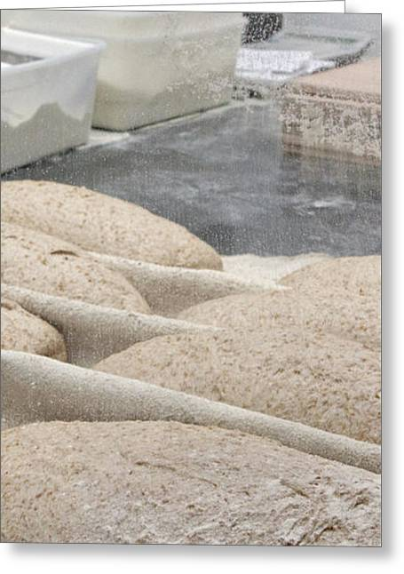 Leavening Loaves  Greeting Card by Oren Shalev