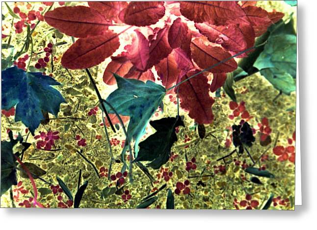 Leaves And Berries - Inversed Greeting Card by Randy Muir