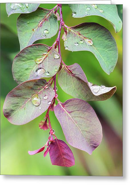 Leaves And Raindrops Greeting Card