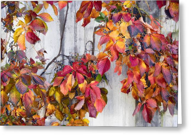 Leaves And Vines Greeting Card by Donald Schwartz