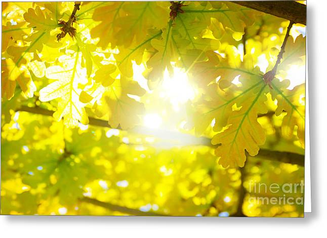 Leaves Backlight Greeting Card by Carlos Caetano
