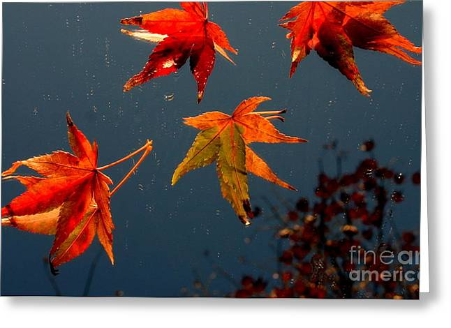 Leaves Falling Down Greeting Card