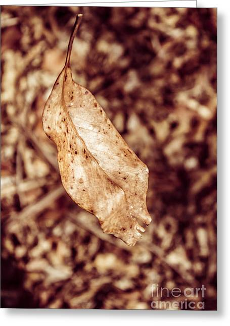 Leaves In Free Fall Greeting Card by Jorgo Photography - Wall Art Gallery