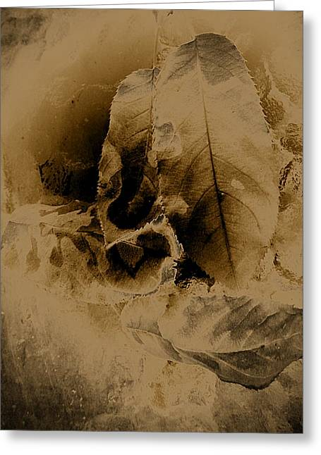 Leaves In Sepia Greeting Card