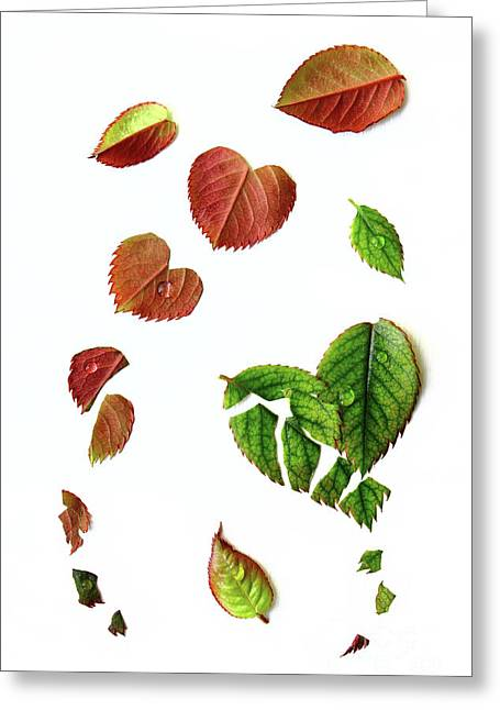 Leaves Greeting Card