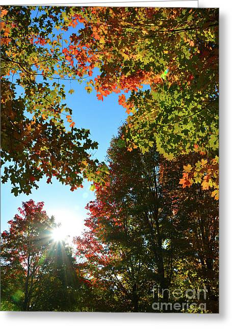 Leaves Of Change Greeting Card