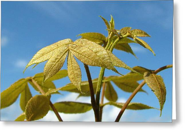 Greeting Card featuring the photograph Leaves Of Gold by Peg Urban