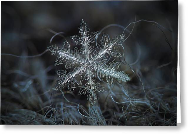 Greeting Card featuring the photograph Leaves Of Ice by Alexey Kljatov