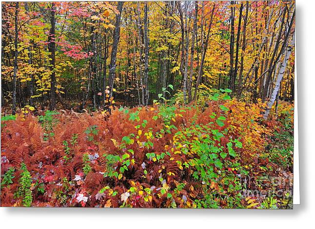 Leaves Of Many Colors  Greeting Card
