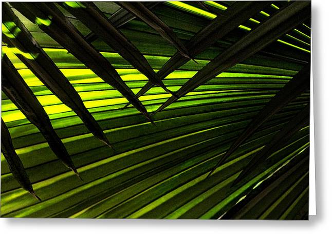 Leaves Of Palm Color Greeting Card by Marilyn Hunt