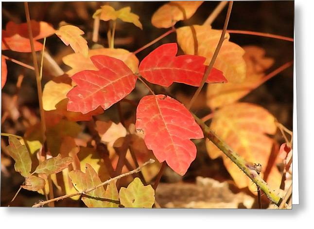Leaves Of Three Greeting Card by Art Block Collections