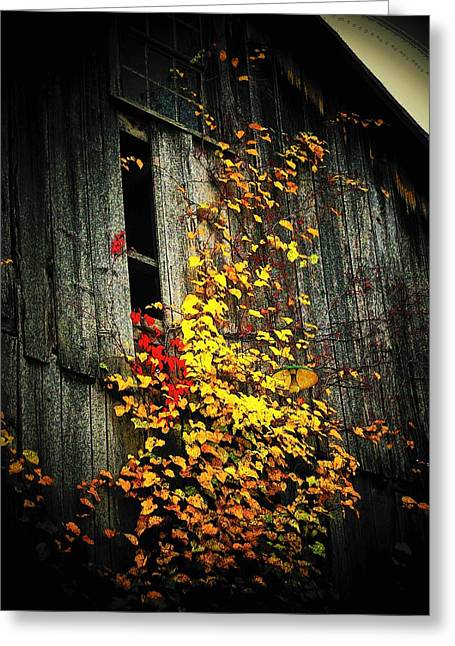 Old Barns Greeting Cards - Leaves on an Old Barn Greeting Card by Joyce Kimble Smith