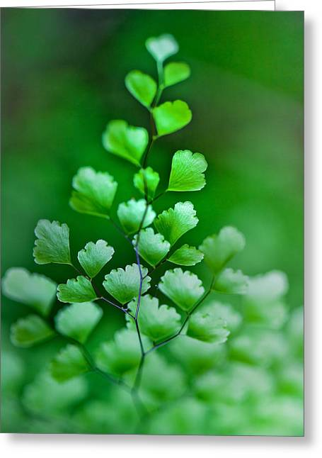 Leaves Rising Greeting Card