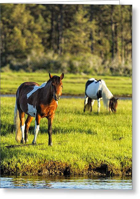 Greeting Card featuring the photograph Leaving The Chincoteague Ponies by Belinda Greb