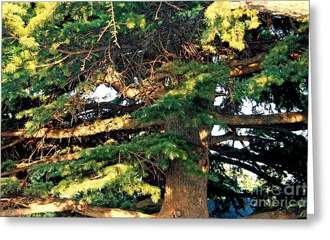 Lebanese Cedar Greeting Card by Lali Kacharava
