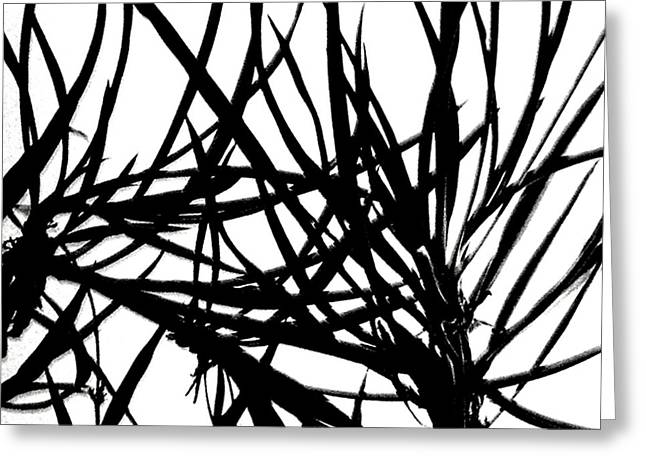 Greeting Card featuring the digital art Lee Krasner Spider Plant Detail 1 by Dick Sauer