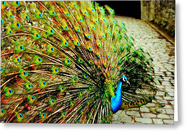 Leeds Castle Peacock Greeting Card by Diana Angstadt
