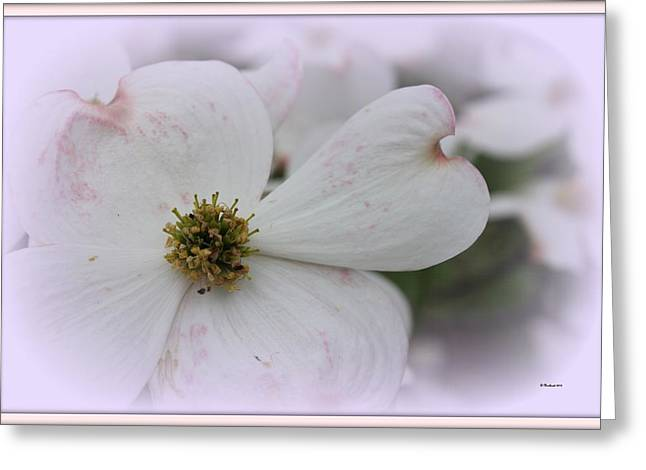 Legend Of The Dogwood Greeting Card by Betty Northcutt