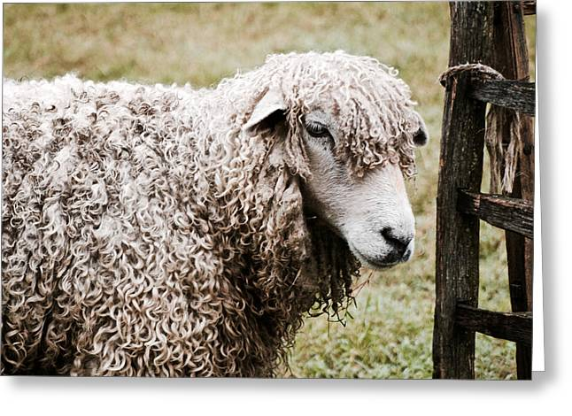 Leicester Longwool Greeting Card