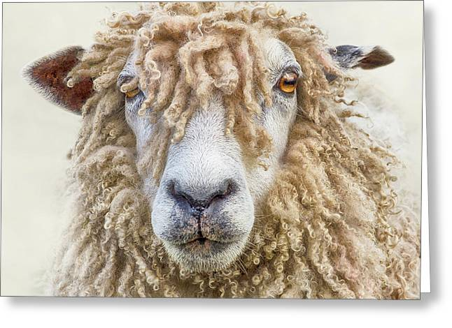 Leicester Longwool Sheep Greeting Card