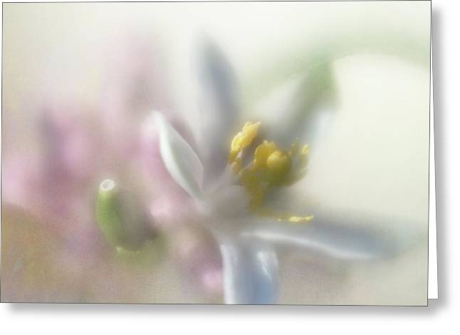 Greeting Card featuring the photograph Lemon Blossom by Elena Nosyreva