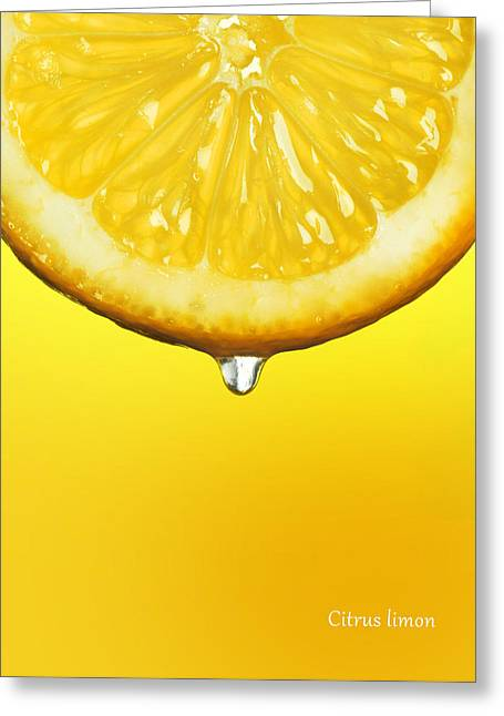 Lemon Drop Greeting Card by Mark Rogan